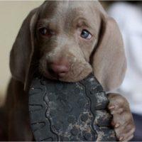 Puppy-11