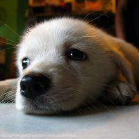 Puppy-13