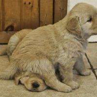 Puppy-15
