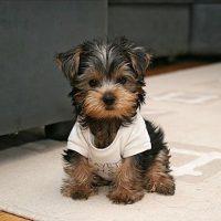 Puppy-21