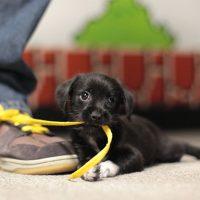 Puppy-37