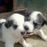 Puppy-47