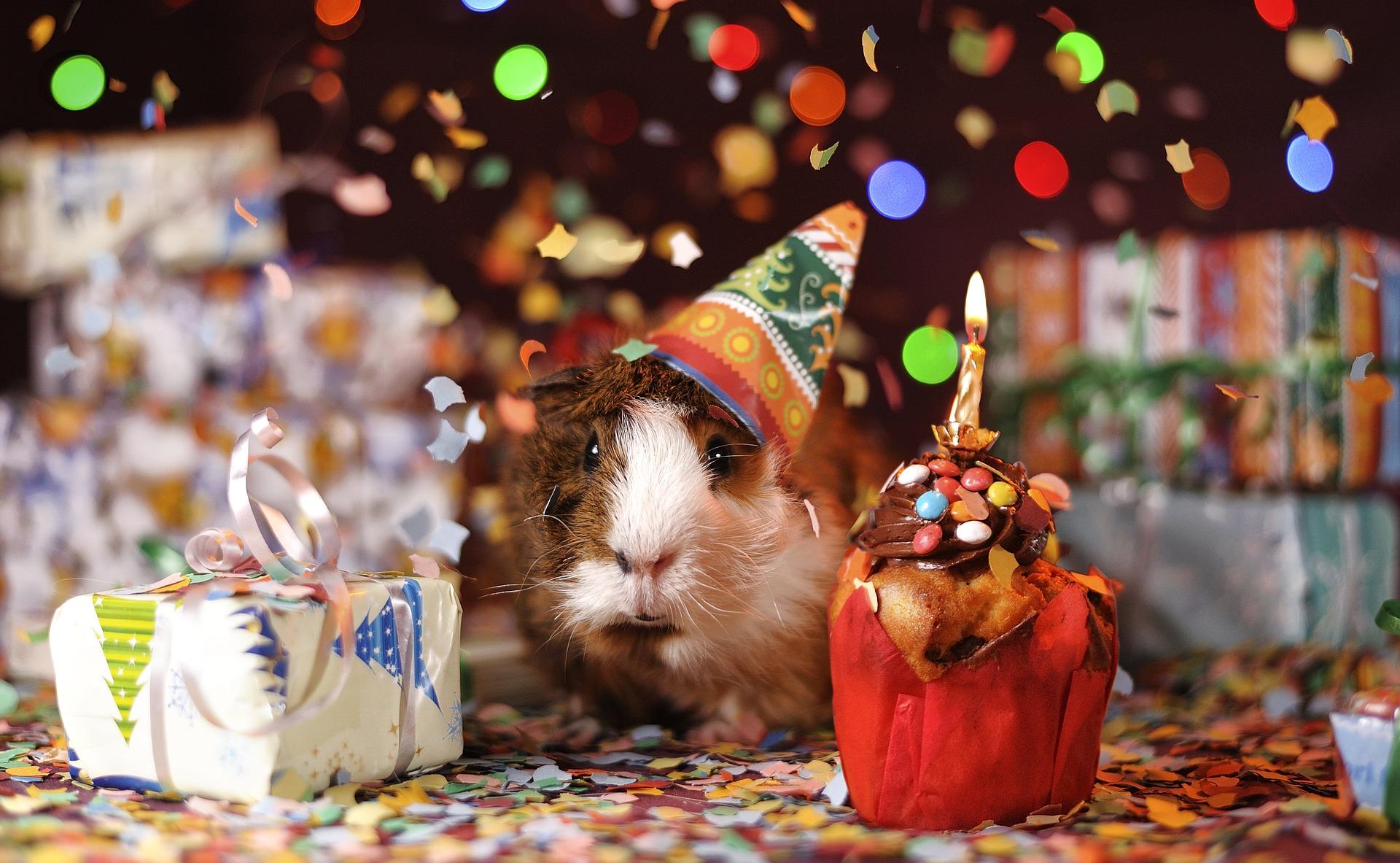 """Happy Birthday """"Blog"""""""