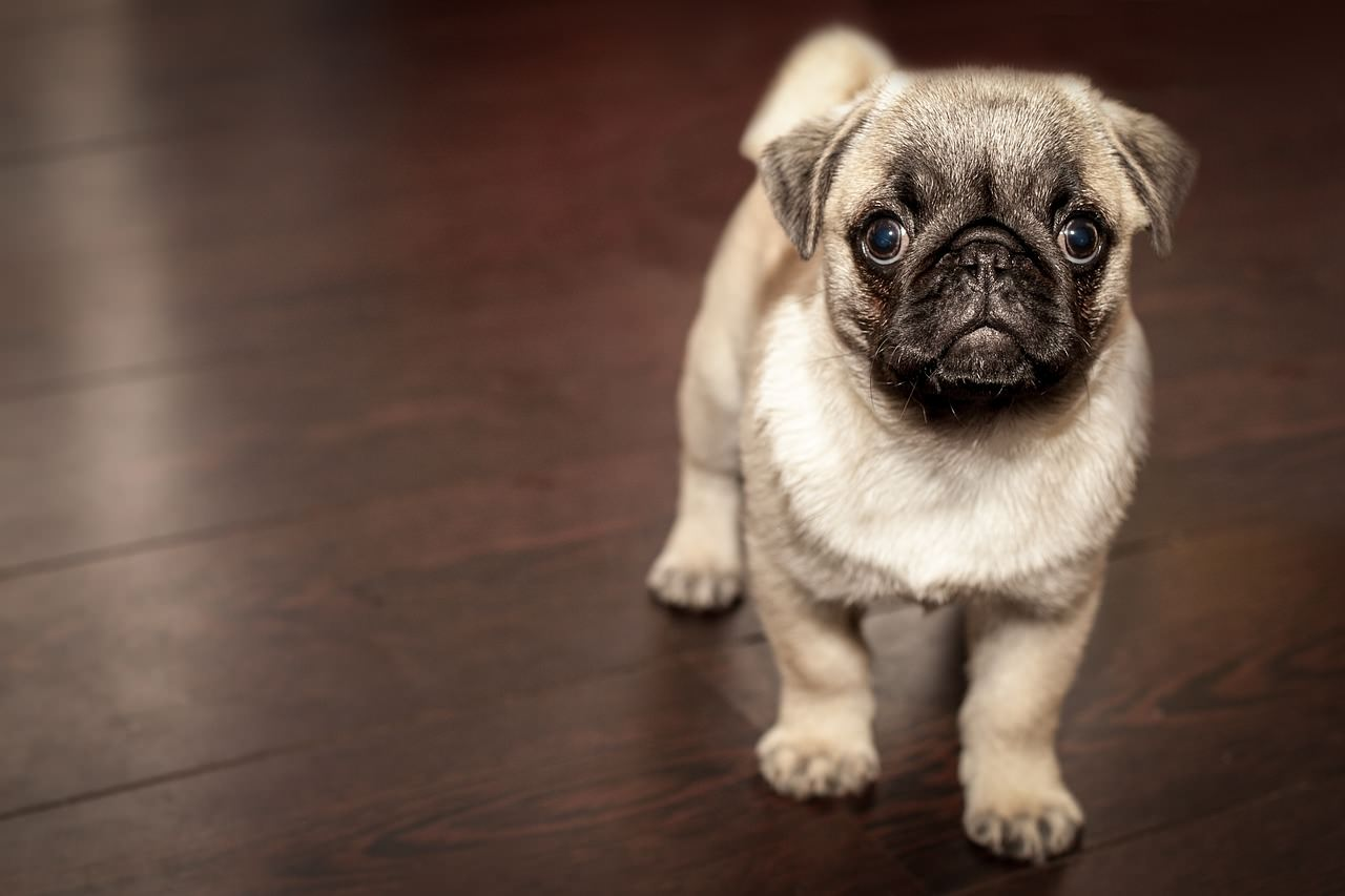 50 Cutest Puppies Ever