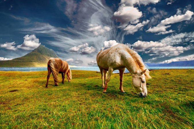 Gorgeous Horses, Iceland